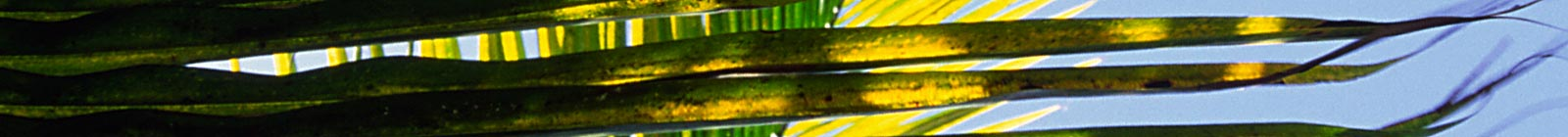 Palmtree Leaf Banner