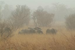 Group of Elephants in Arli National Park