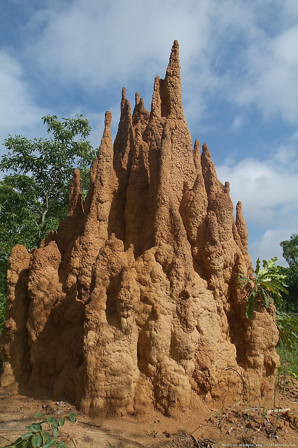 Termite mound cross section