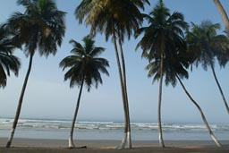 Ghana, swaying palm trees.