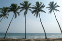 5 Palm Trees, beach in back. Near Princes Town