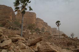 Bandiagara Escarpement Dogon Country near Guiminie, Mali, Palm Trees, Harmattan.