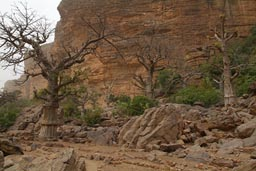 Dogon cliffs, baobabs, old abandoned village.