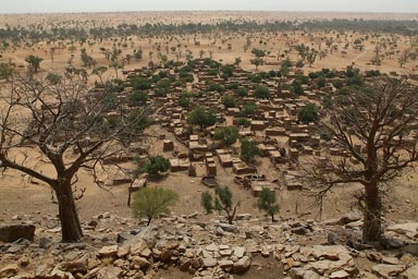 Dogon village of Telly, 2 baobabs, the dunes behind.