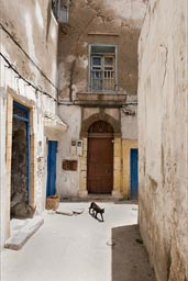 Small bright alley in Essaouira, cat.