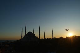 Sunset over Blue Mosque Istanbul. Seagull.