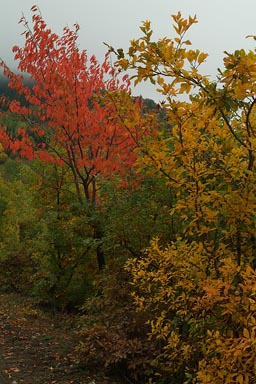 Yeni Rabat trail, red and yellow trees in autumn colours.
