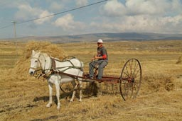 Cildir Golu, hay raked by horse cart. Turkey eastern Anatolia.