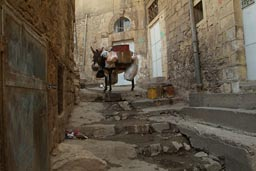 Donkey in an alley, uphill Mardin, Turkey.