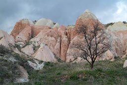Tree in Cappadokia landscape.