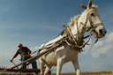 Horse pulled rake cart, Anatolia, making hay.