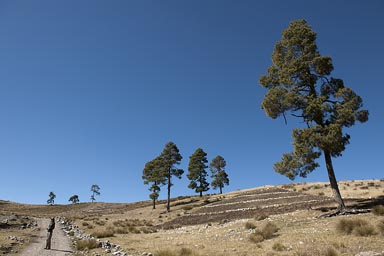 Climbing high. At 3600m of altitude, near Todos Santos, conifers, potato fields, this is Guatemala, Western Highlands.