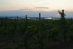 Wineries, where we hit the Danube near Ostrov.