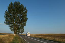 Road and Tree in Danube Delta