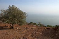 Lake Chapala, tree on red rock, lake in a haze.