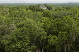 Maya pyramid/temple overlooking the jungle in Calakmul,.