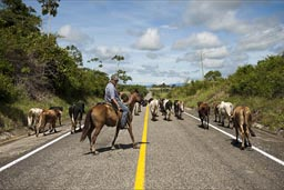 Rider, cattel herder on road southern Chiapas.