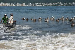 Fishing with nets in Acapulco.