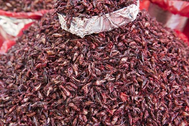 Chapulines, Grasshoppers in lemon and chili..