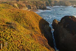 California coastal vegetation.