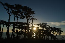 Trees Lands End San Francisco, sunset.
