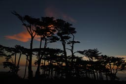 Later same sunset, trees Lands End San Francisco.