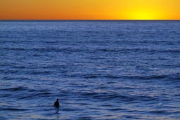 Surfer in blue ocean water, after sunset orange sky. California.