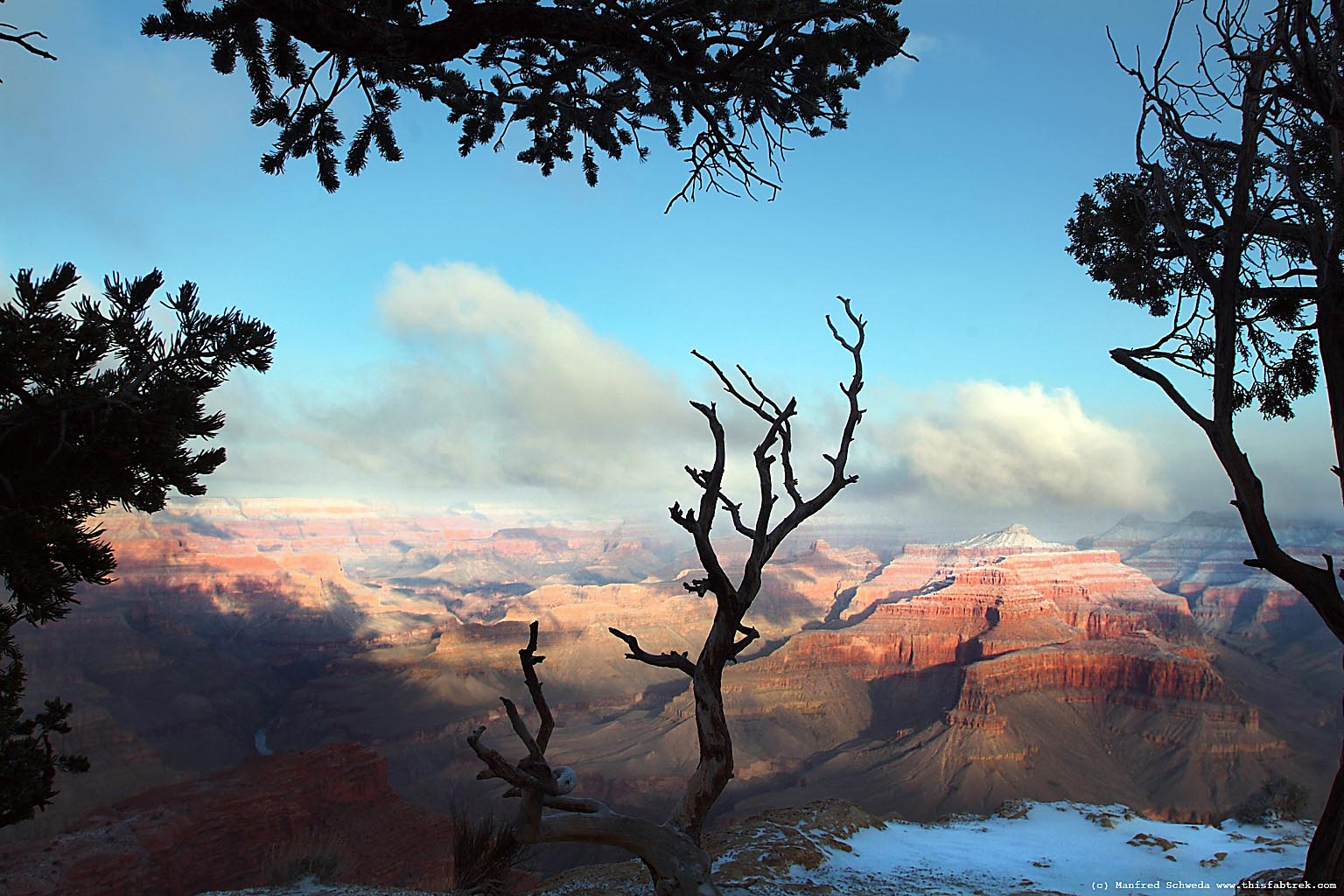 Trees scrub Grand Canyon Photography and Journey