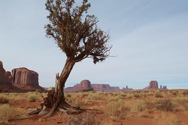 Tree, Monument Valley.