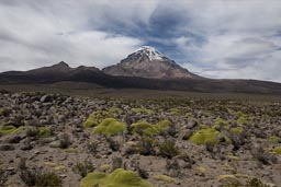 Bolivia, Volcan Sajama on Altiplano.