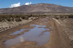Water on Bolivian desert altiplano road.