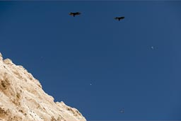 But the vultures are much more visible., south of Arica, northern Chile.