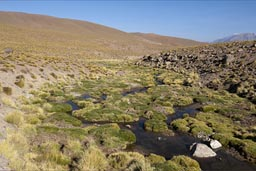 Stream on Chilean altiplano. Atacama.
