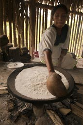 Spread the yuca rasple on stove. The making of yuca bread in Ecuador jungle, by Indigena woman. Yuca is Cassava.