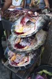 Blood dripping from turtle shells in Belen Market in Iquitos, Peru.