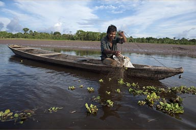 On a side arm of the Huallaga river, a Cocama Cocamilla man fishes with his net, also piranhas, Peruvian jungle Loreto.