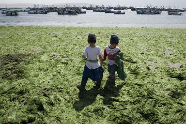 Green seaweed, beach in Paracas, Peru.