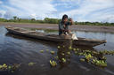 On a side arm of the Huallaga river, a Kokama Kokamilla man fishes with his net, also piranhas, Peruvian jungle Loreto.